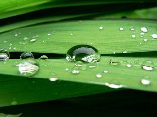 File:Waterdruppel op blad.JPG
