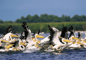 The Danube Delta in Romania with its diverse b...