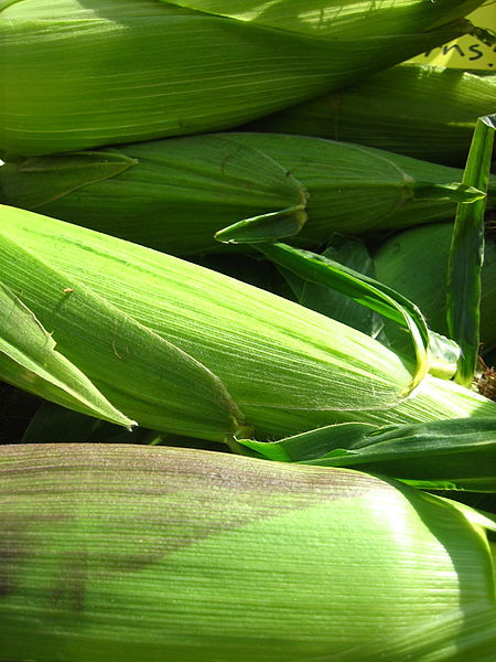 File:Corn husks (1350123723).jpg
