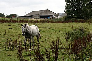 English: Horse and Barn.
