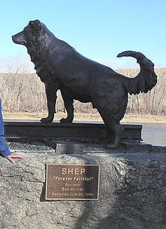 Statue of Shep at Fort Benton, Montana. Image via Wikipedia.