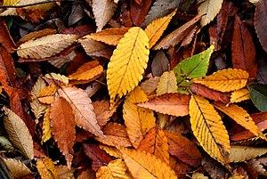Autumn Fall Maintenance
