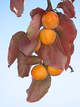 Diospyros kaki fruit 02 by Line1