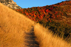 A mountain trail in autumn, Provo, Utah, US.