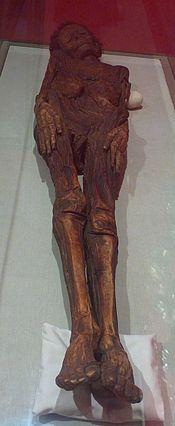 Guanche Mummy Of Madrid Wikipedia