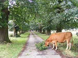 English: Snacking on a Tree, near to Everton, ...