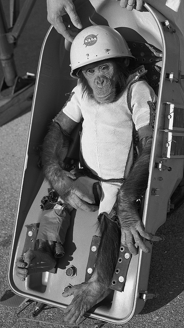 ham chimpanzee wikiwand