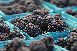 Blackberries in containers, 2008.