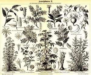 Medical plants II.