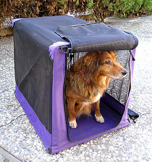 English: dog in a soft crate Taken by Elf