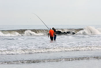 English: Ecuador, Manta: Murciélago beach fish...