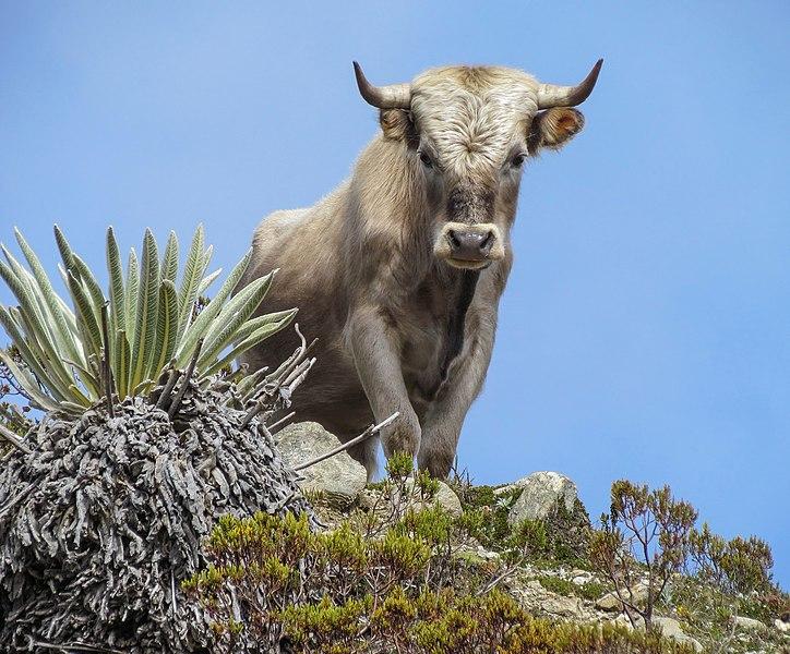 Fotografia dun animal