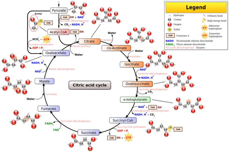 how to learn biochemistry cycles