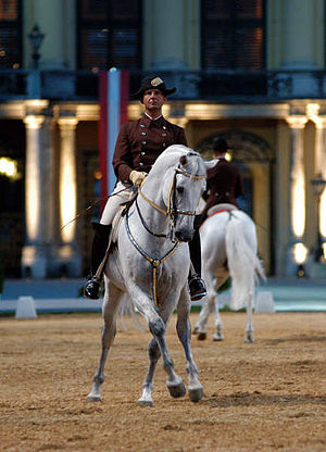 English: Lipizzaner stallion, performance Schö...