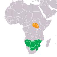Distribusi badak Putih (jingga: badak putih utara (C. s. cottoni), hijau: badak putih selatan (C. s. simum)).