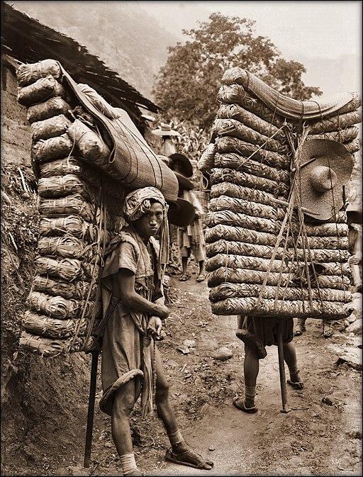 Men Laden With Tea, Sichuan Sheng, China 1908 Ernest H. Wilson RESTORED