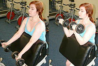 The biceps curl is sometimes performed on the ...