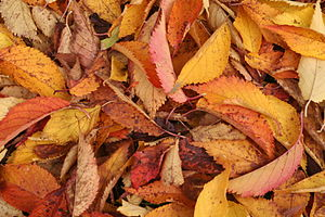 Autumnnleaves