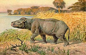 Coryphodon