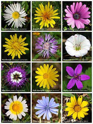 A flower poster.