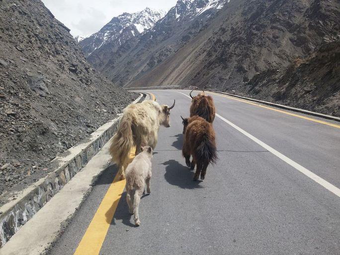 KKH Pakistan (SILK ROAD)