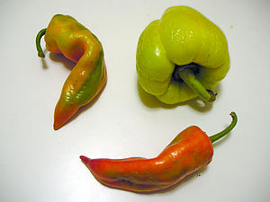 Three semi-random paprika fruits found in Joy'...