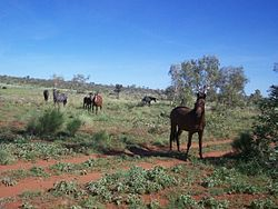 A small group of dark-colored horses standing near a dirt road