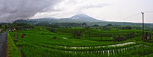 English: rice terrace Jutilawih Bali Indonesia...