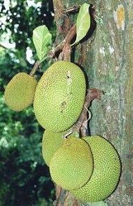 how to cut jackfruit raw
