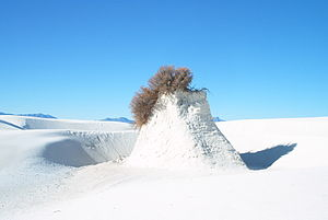 Plant in White Sands National Monument, New Me...