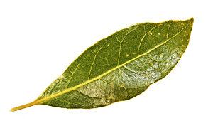 Remove the Bay Leaf or Die (2/2)