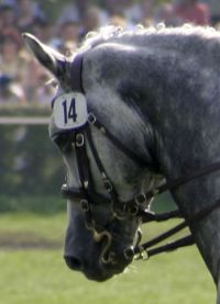 Double bridle, with both curb and snaffle bits.