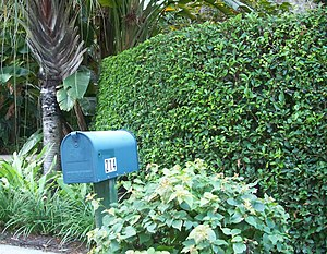 : Gate House: Mailbox and hedge