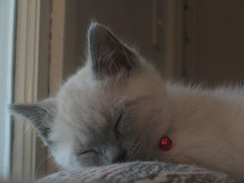 File:Sleeping cat 2006.jpg