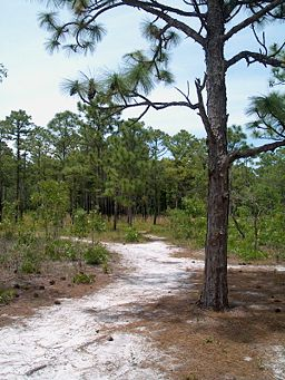 Carolina Beach State Park - Wikipedia
