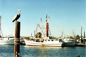 A pelican surveys the waterfront, Tarpon Sprin...
