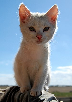 Another picture of smudge this little kitten s...