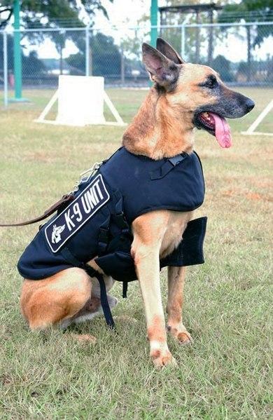police dog, chó cảnh sát
