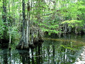 Everglades National Park, swamp, Florida, USA