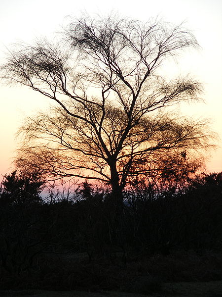 File:New Forest lone tree 01.jpg
