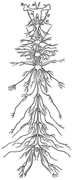 Nervous system of an insect