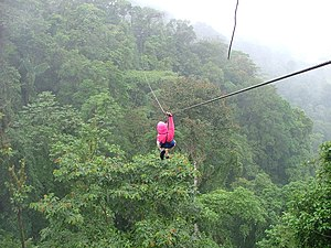 English: A zip-line over the rainforest canopy...