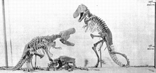File:AMNH rex mount.png