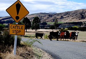 "New Zealand road sign warning of a ""cattl..."