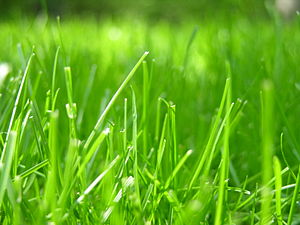 Depth of Grass