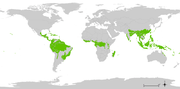 The rainforest belt around the earth