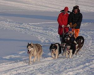Dogsled team in Chatfield, Minnesota
