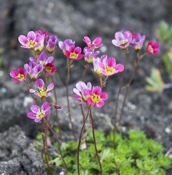 File:Small flowers (5371688781).jpg