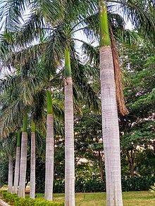 Diagram Palm Tree Trunk | Online Wiring Diagram