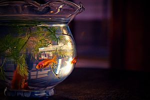 English: The fish bowl 日本語: 金魚鉢
